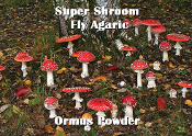 Super Shroom Fly Agaric Ormus Powder