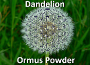 Dandelion Ormus Powder