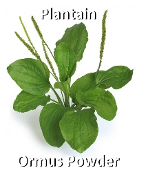Plantain Ormus Powder