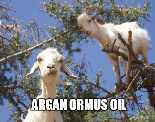 Argan Ormus Oil