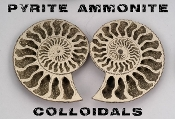 Pyrite Ammonite Colloidals