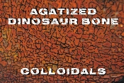 Agatized Dinosaur Bone Colloidals