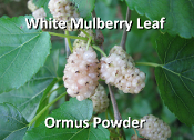White Mulberry Leaf Ormus Powder